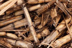 SAT Ferroli - biomasa